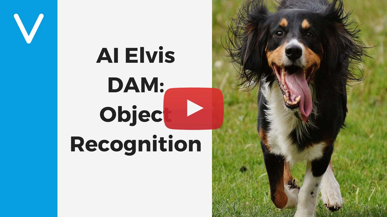 elvis-dam-ai-integration-object-recognition.jpg
